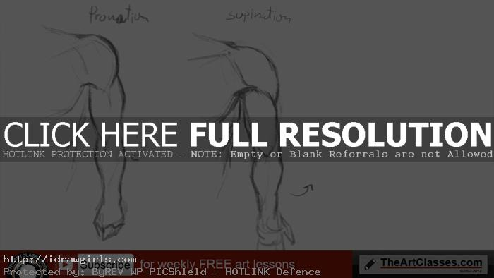 arm drawing pronation supination