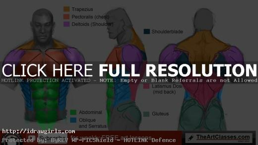 how to draw man muscle body anatomy