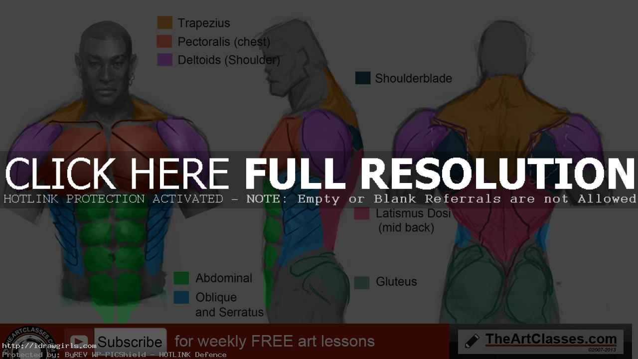 How to draw man muscles body anatomy - drawing and digital painting ...