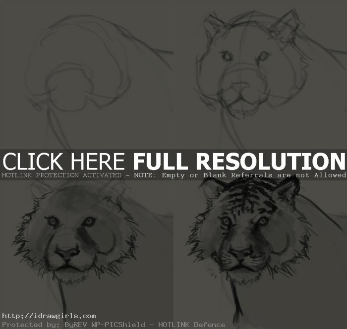 how to draw tiger face