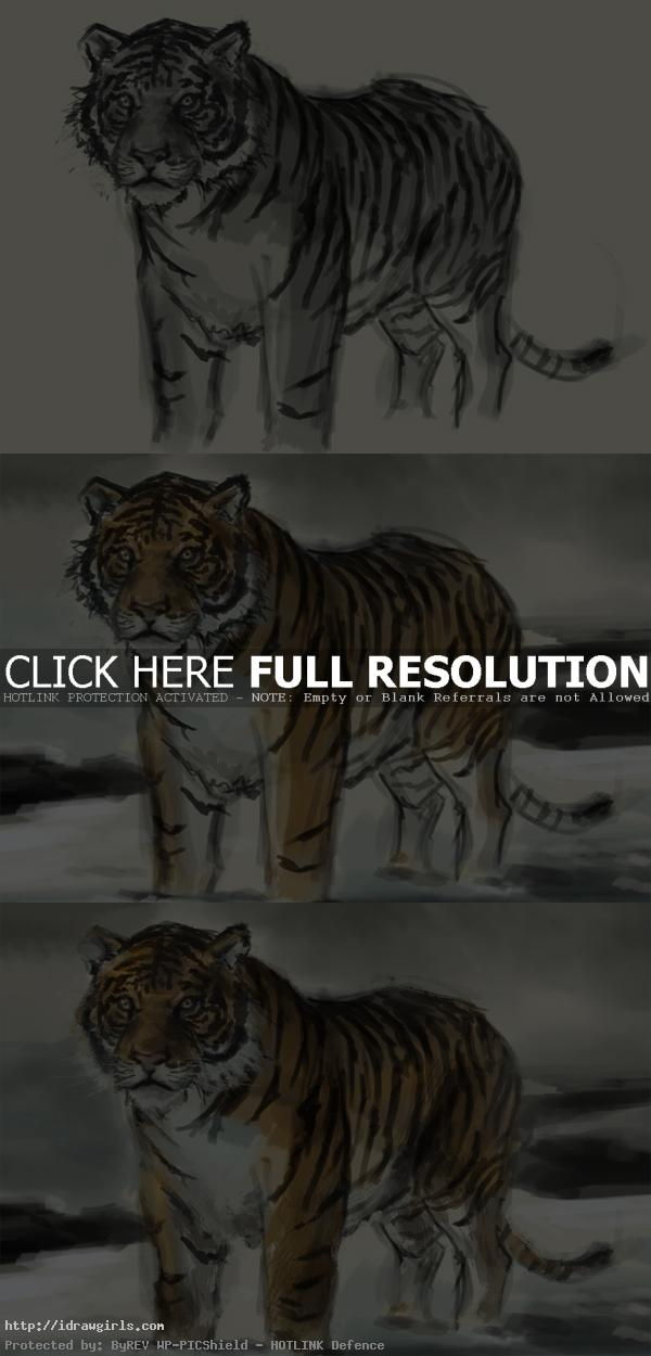 how to paint tiger