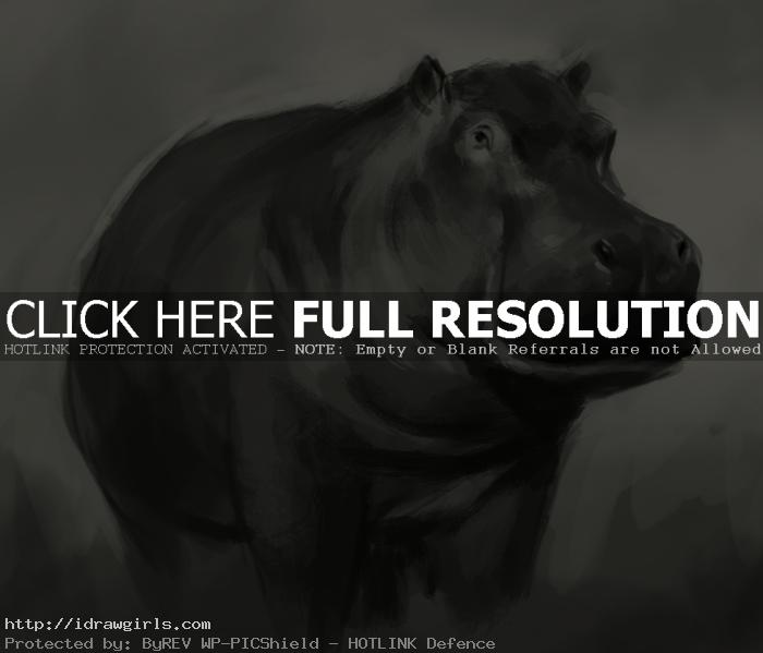 hippopotamus drawing