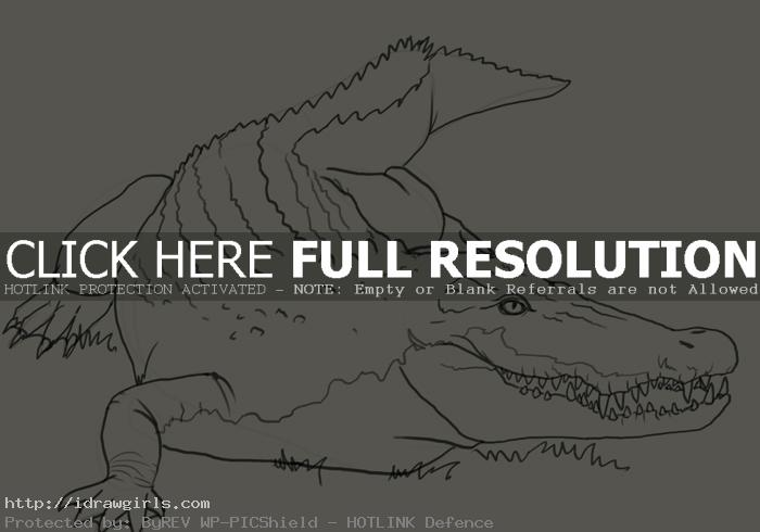 crocodile drawing