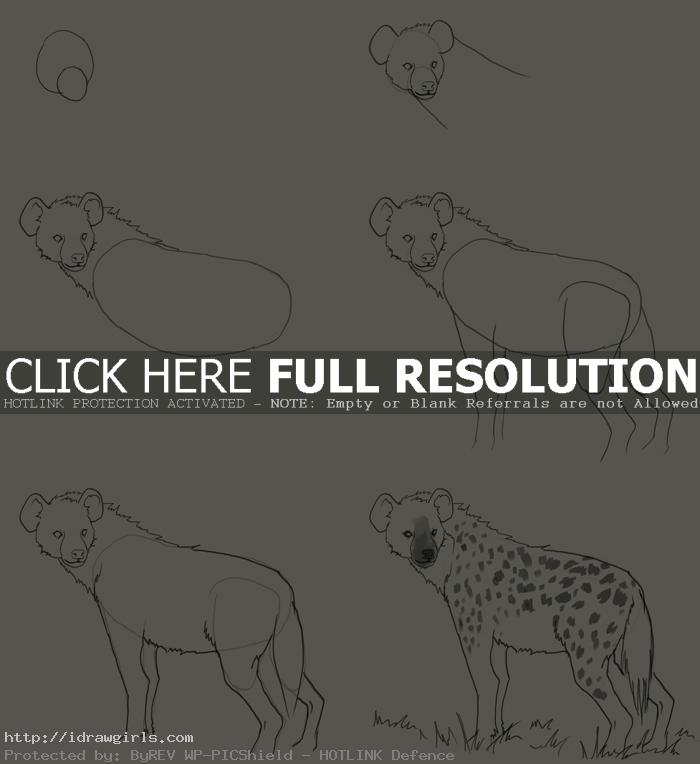 how to draw hyena