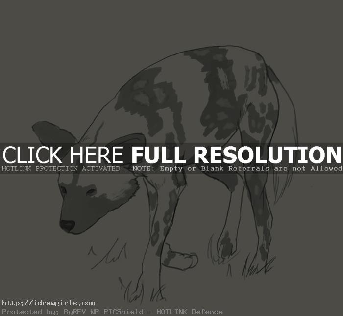 How to draw African wild dog