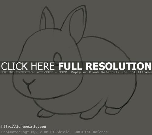 bunny drawing