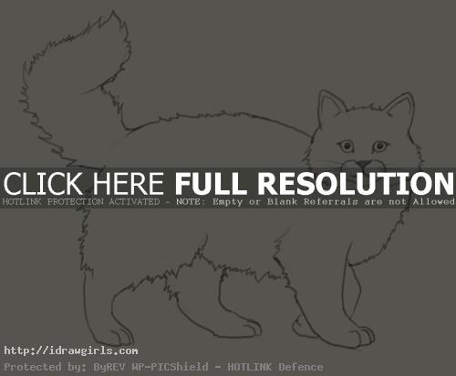 How to draw cat