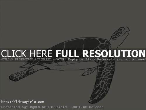 How to draw green sea turtle