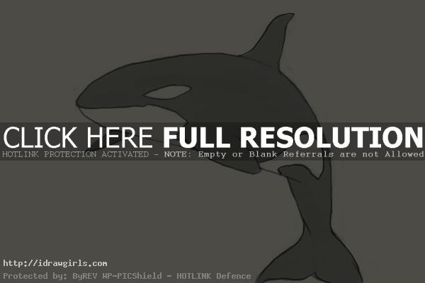 How to draw killer whale