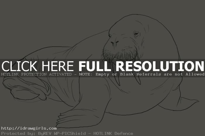 How to draw walrus