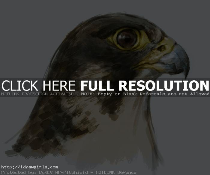 Painting falcon tutorial